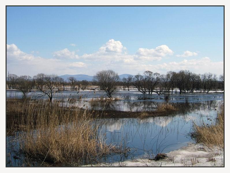 """фото """"Весенний разлив"""" метки: пейзаж, весна, вода"""