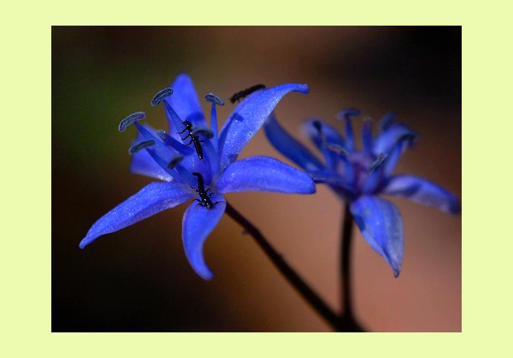 """фото """"Together"""" метки: макро и крупный план, природа, цветы"""