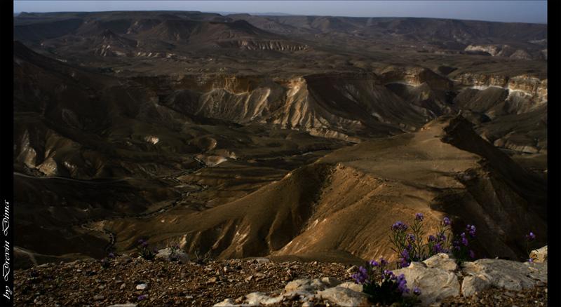"фото ""good morning Negev"" метки: пейзаж, весна, закат"