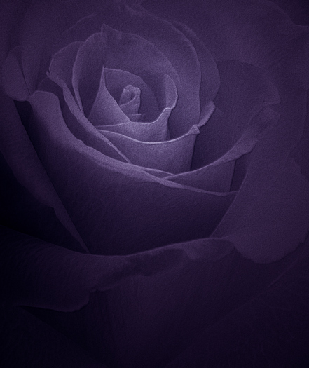 "фото ""Purple for Paul"" метки: природа, цветы"