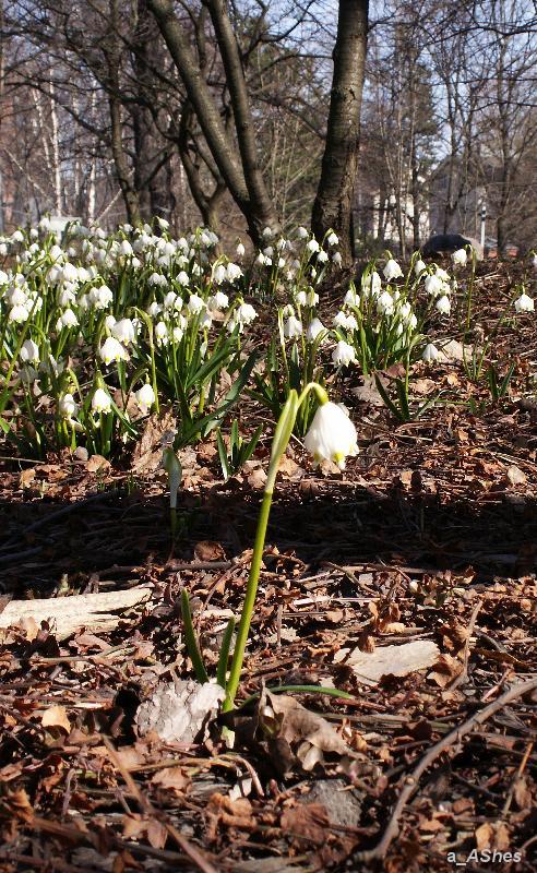 "photo ""Schwarzen Strich   Черная полоса"" tags: landscape, nature, flowers, spring"