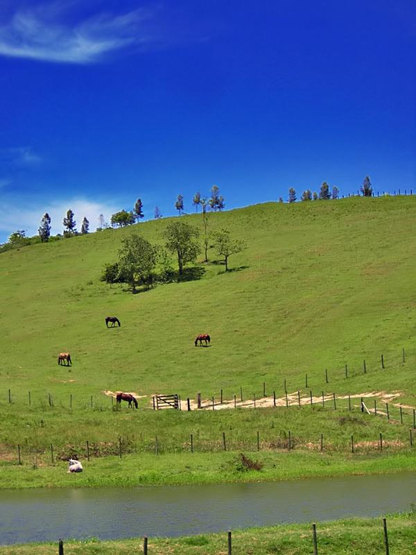 """photo """"Fields"""" tags: landscape, nature, pets/farm animals"""