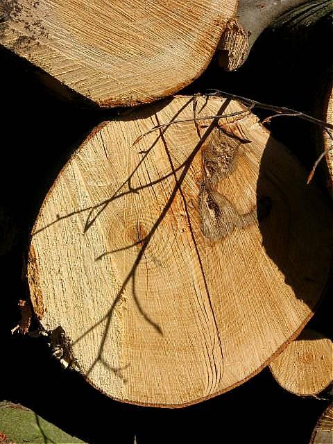 """фото """"Shadow in the wood."""" метки: природа,"""