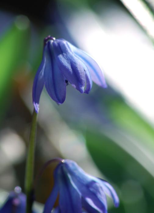 """фото """"Весенний этюд"""" метки: природа, макро и крупный план,"""