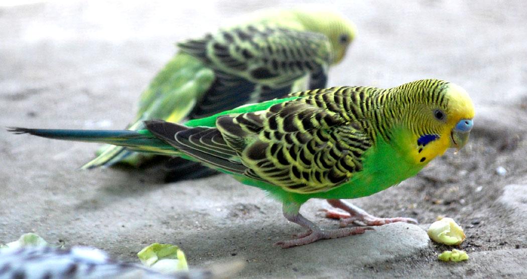 """фото """"Colourful Sparrow....So Cute !"""" метки: природа, абстракция, дикие животные"""