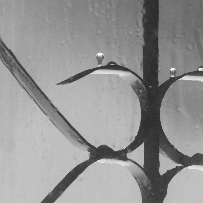 """photo """"Antigraviti :D"""" tags: nature, black&white,"""