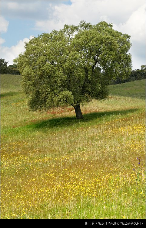 """фото """"Spring tree"""" метки: пейзаж, весна, лес"""