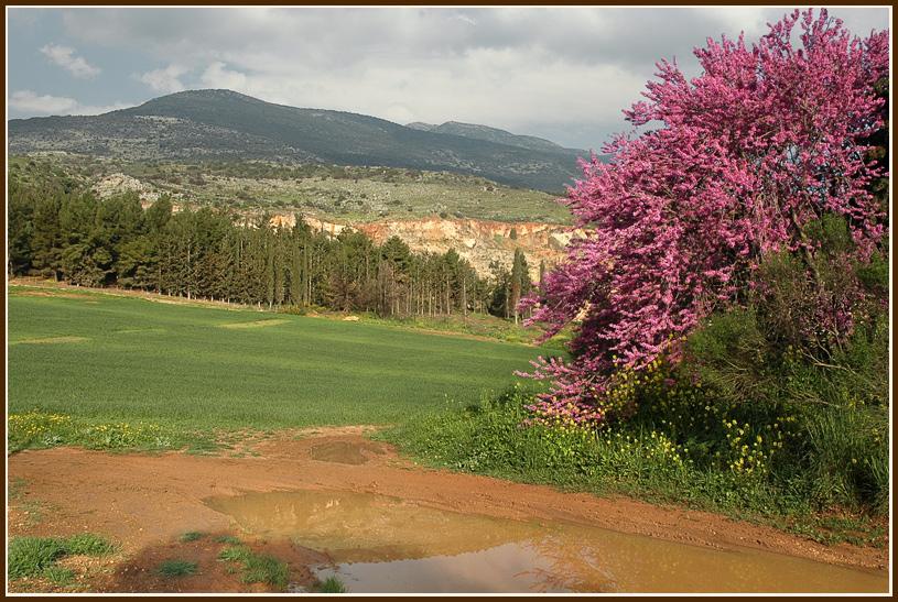 "фото ""Утром"" метки: пейзаж, горы, лес"