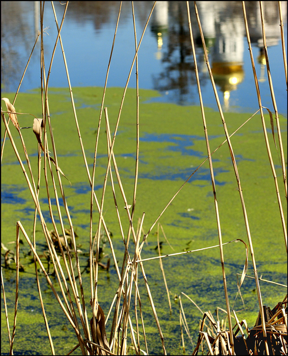 "photo ""Rushy a pond"" tags: nature,"