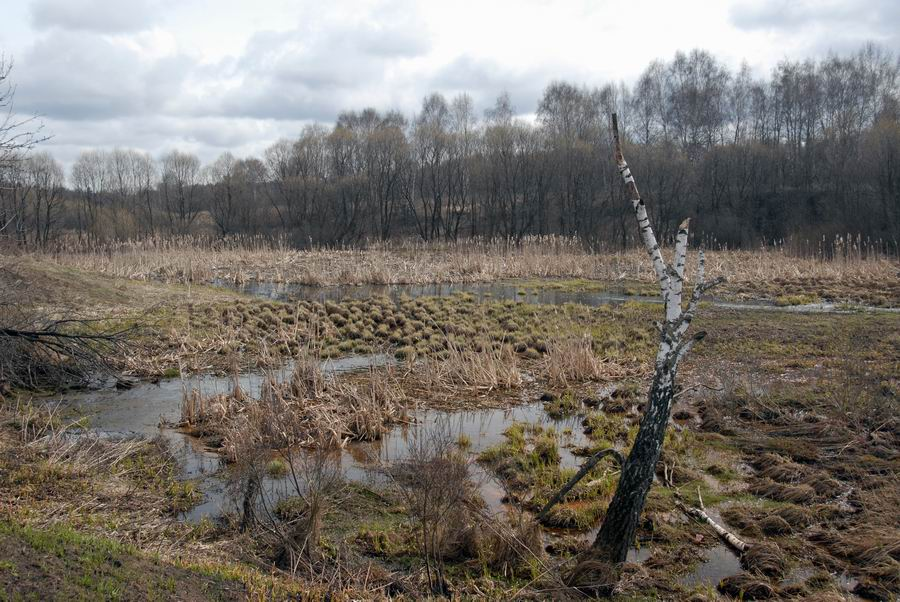 "photo ""Swamp"" tags: landscape, spring"