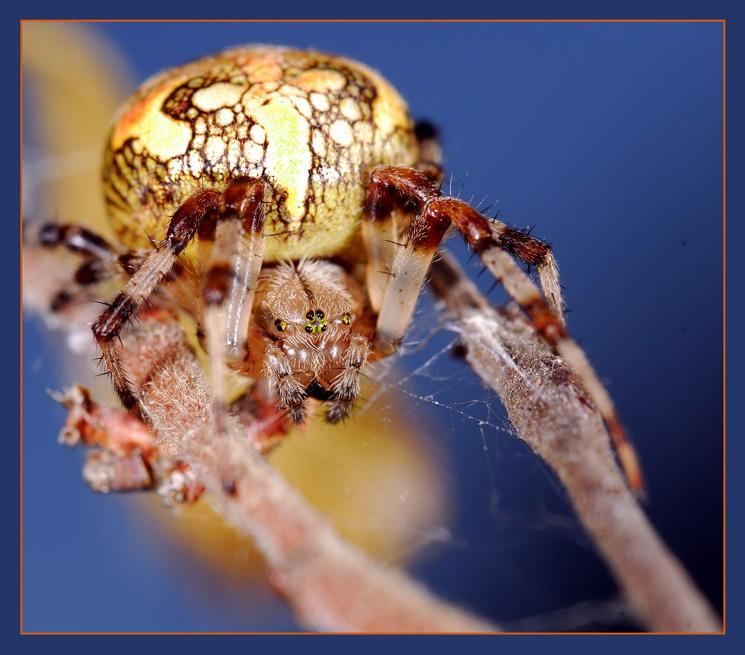 """фото """"На брусьях"""" метки: природа, макро и крупный план, насекомое"""