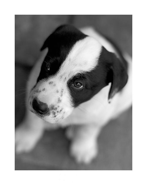 "photo ""Black and white"" tags: portrait, nature, pets/farm animals"