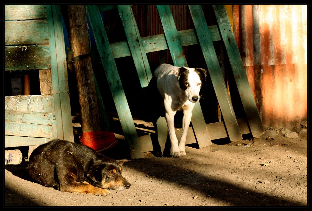 "photo ""End of a Long Day"" tags: nature, pets/farm animals"