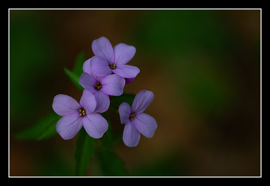 """photo """"In the deep forest"""" tags: macro and close-up,"""