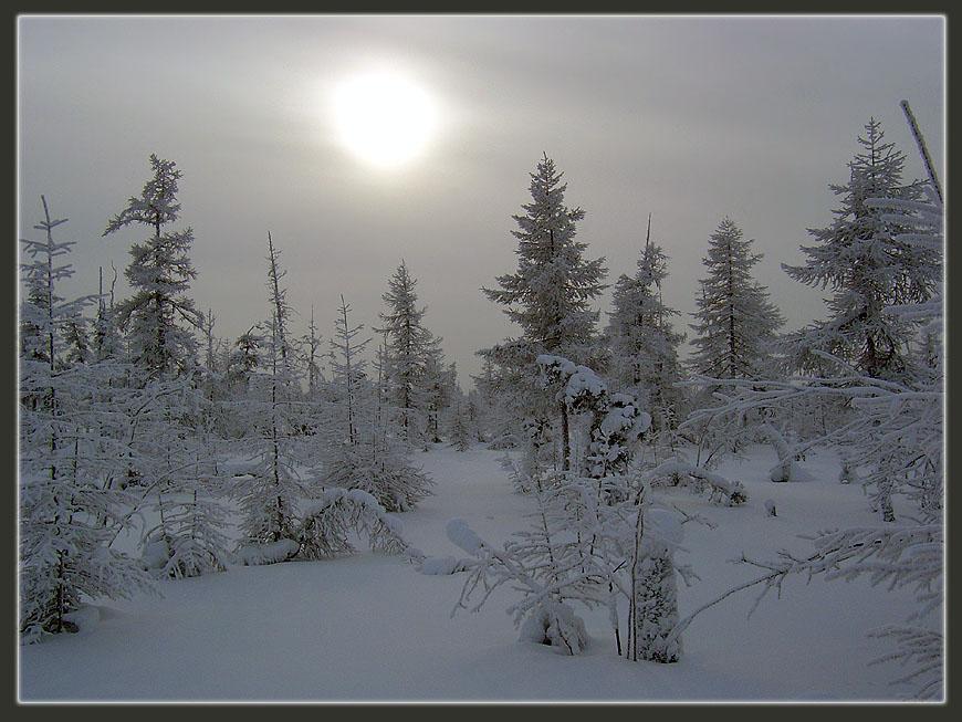 "фото ""Холодное солнце Севера 2"" метки: пейзаж, зима, лес"