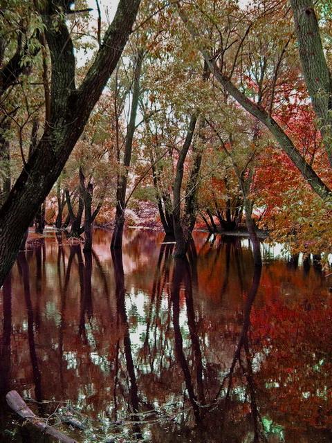 """фото """"Осеннее настроение"""" метки: пейзаж, осень"""