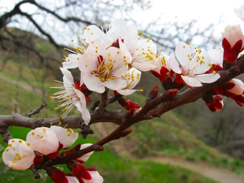 """фото """"Весна"""" метки: природа, макро и крупный план, цветы"""