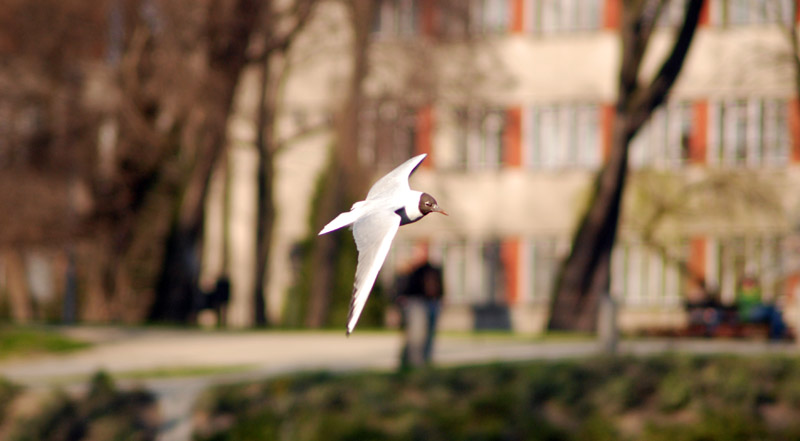 "фото ""Spring flight"" метки: природа,"
