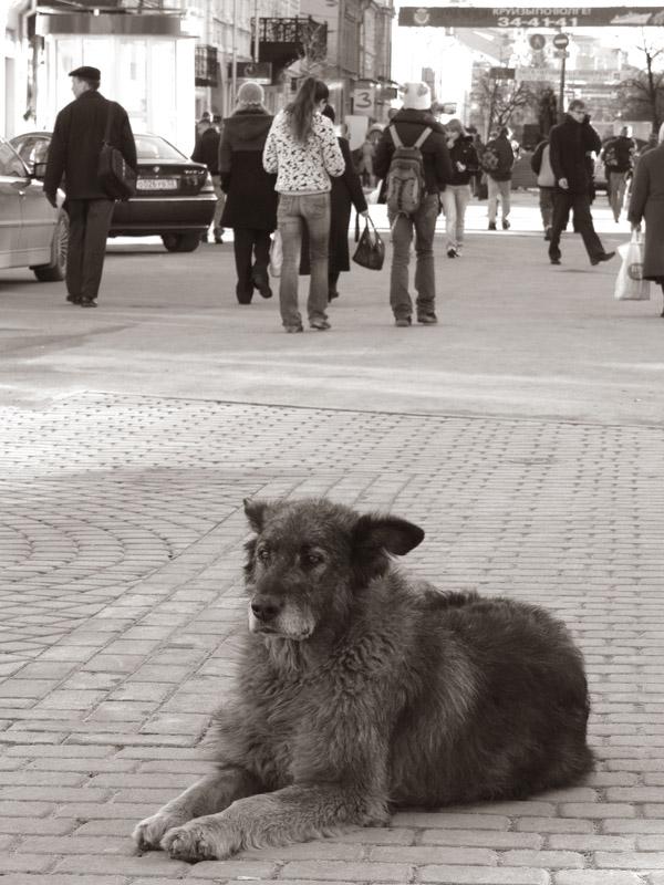 """фото """"Бездомный"""" метки: разное,"""