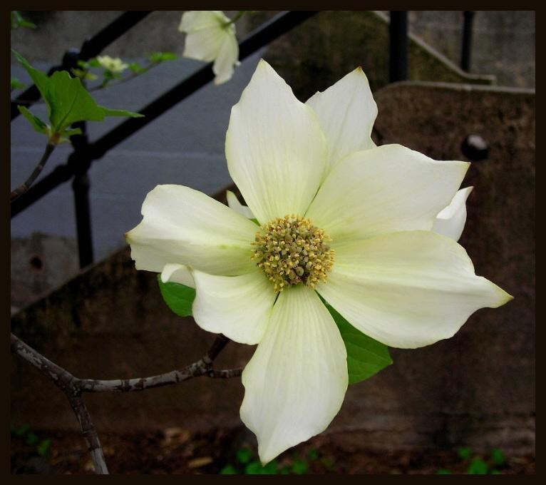 """фото """"never say never"""" метки: природа, макро и крупный план, цветы"""