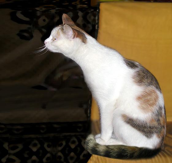 "photo ""curiosity"" tags: nature, pets/farm animals"