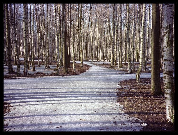"""фото """"Lines 1"""" метки: пейзаж, весна, лес"""