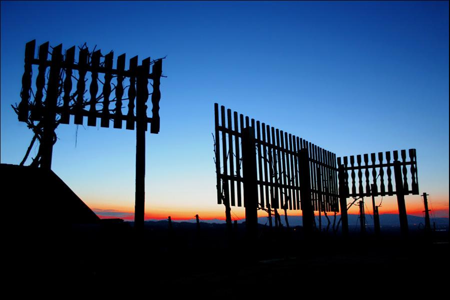"""фото """"Sunset over the vineyard"""" метки: пейзаж, природа, закат, цветы"""