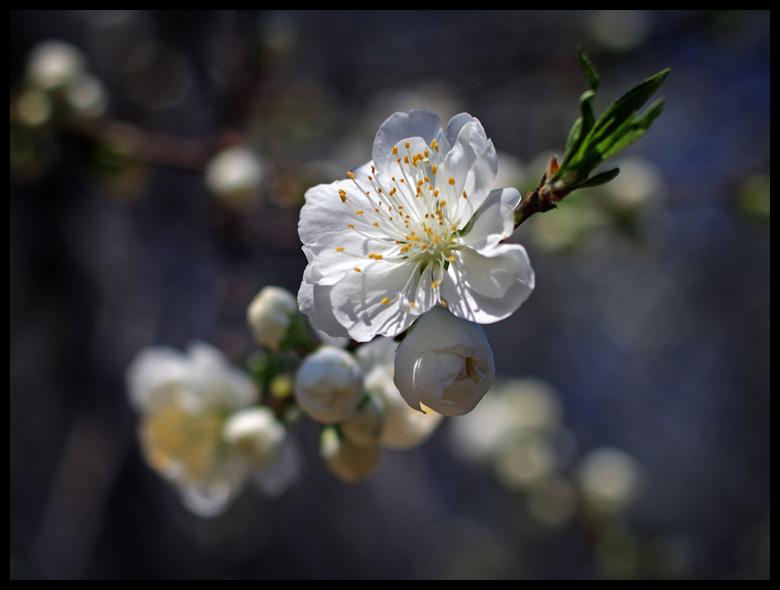 "фото ""***"" метки: природа, путешествия, Азия, цветы"