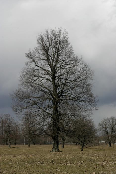 """фото """"Дубовая роща"""" метки: пейзаж, лес"""