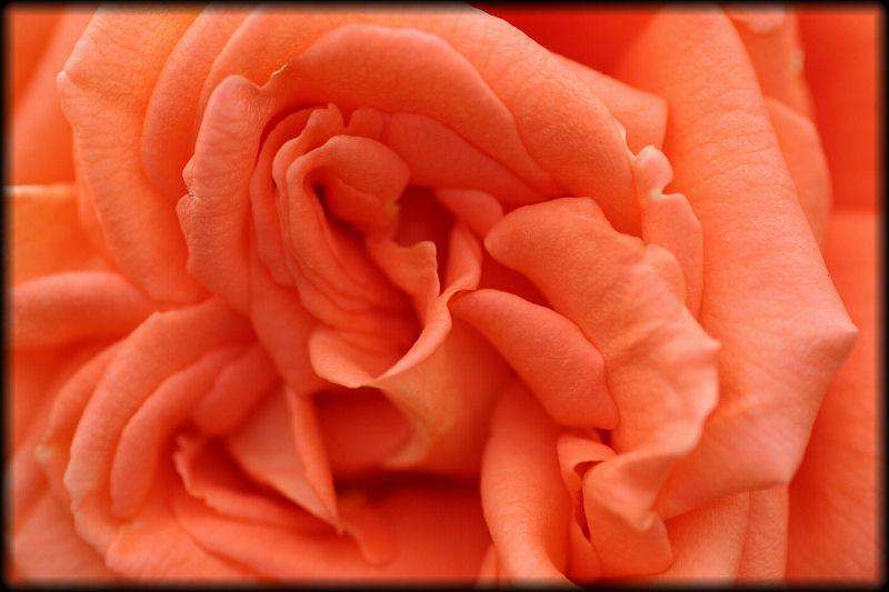 """фото """"Caresses"""" метки: природа, макро и крупный план, цветы"""
