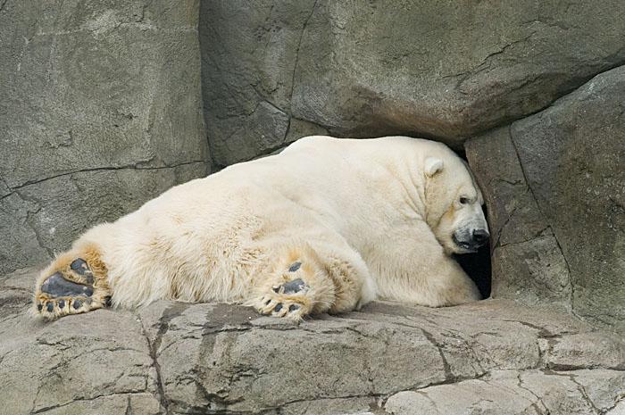 """фото """"Ну дайте поспать!"""" метки: природа, юмор, дикие животные"""