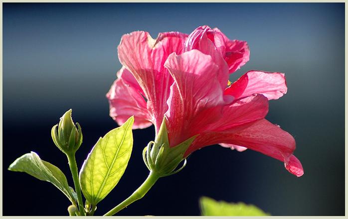 """фото """"Towards the light"""" метки: природа, пейзаж, весна, цветы"""