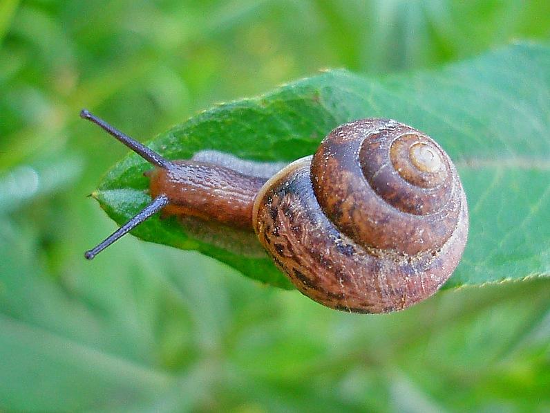 """фото """"Тише едешь - позже приедешь..."""" метки: природа, макро и крупный план, насекомое"""