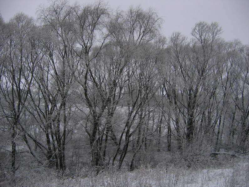"""фото """"Мягкий иней"""" метки: пейзаж, зима"""