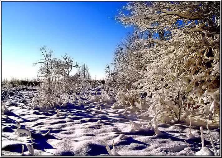 """фото """"Зимняя.."""" метки: пейзаж, зима"""