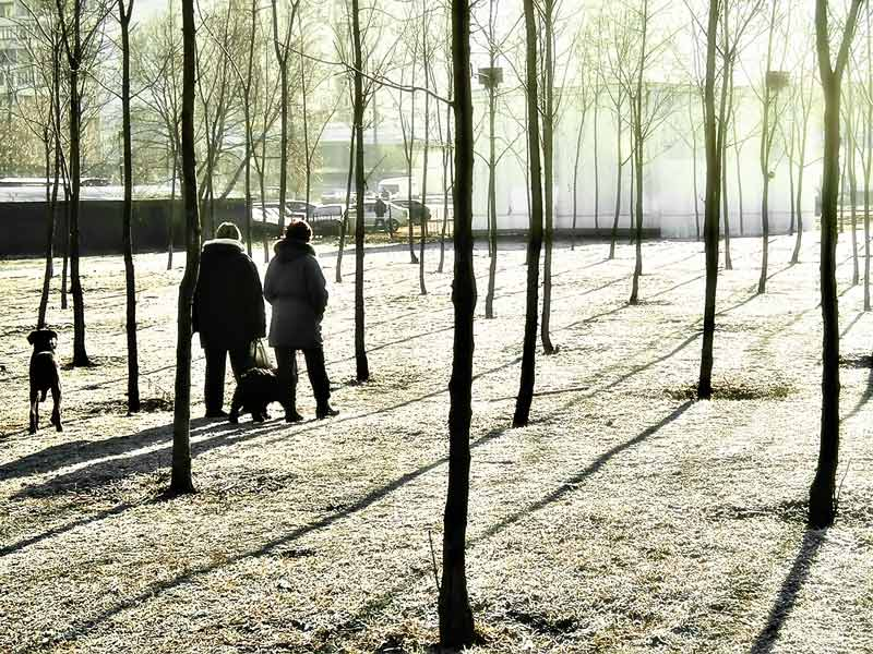 "фото ""прогулка в парке"" метки: пейзаж,"