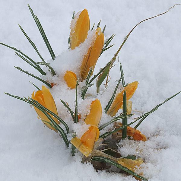 """фото """"April's joke 1"""" метки: природа, разное, цветы"""