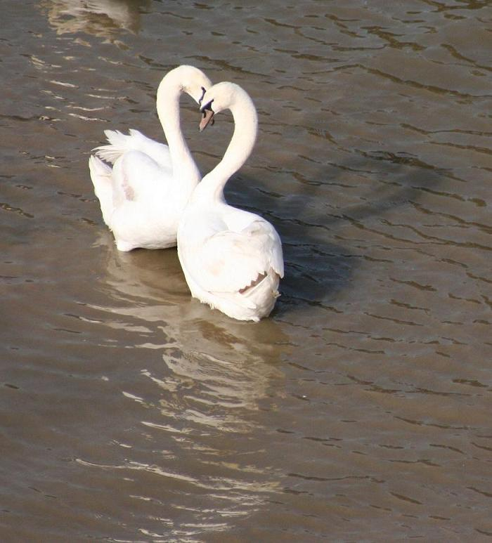 "photo ""Love birds ....."" tags: nature, wild animals"