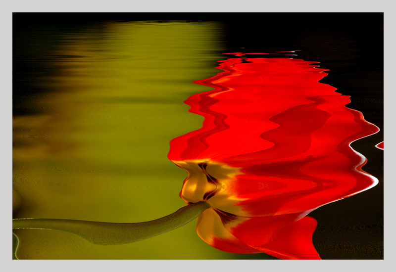 """photo """"tulip in the water"""" tags: abstract,"""