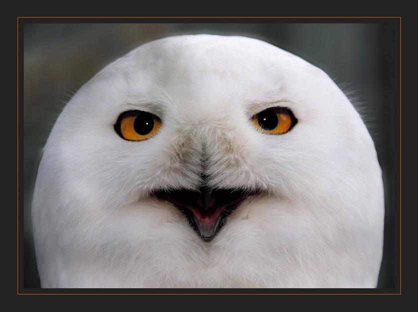 """фото """"Улыбочку!!!"""" метки: природа, портрет, дикие животные"""