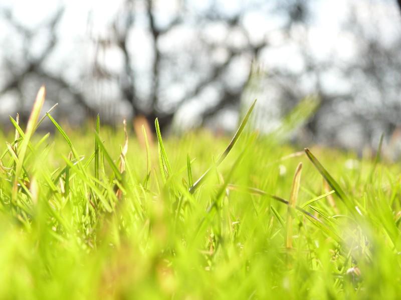 """фото """"Солнечная"""" метки: природа, макро и крупный план, цветы"""