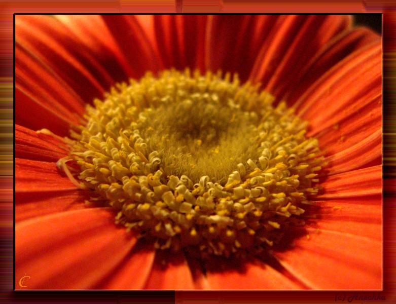"""фото """"Intimate part of flower"""" метки: макро и крупный план,"""