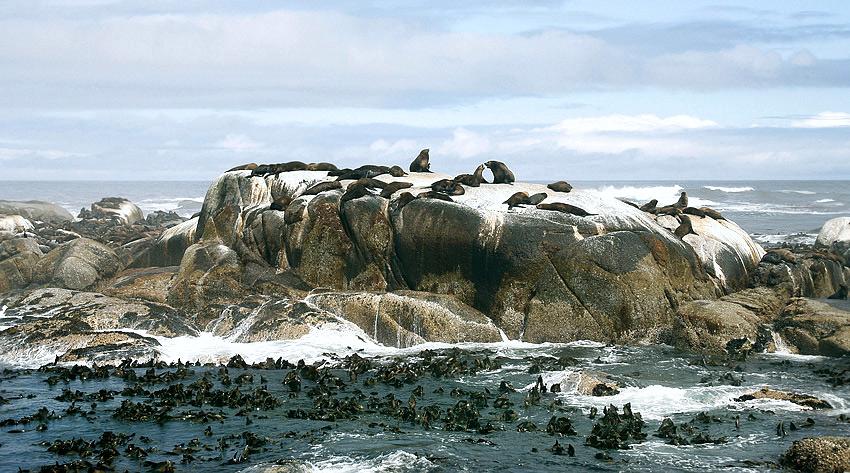 """фото """"Тюлений камень"""" метки: пейзаж, природа, вода, дикие животные"""
