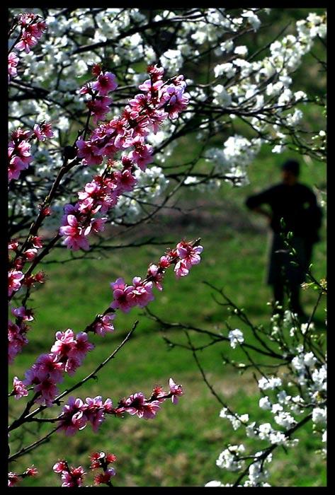 """фото """"the spring"""" метки: пейзаж, весна"""