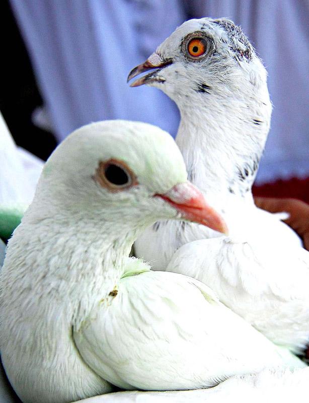 "photo ""Best Friends!"" tags: nature, pets/farm animals"