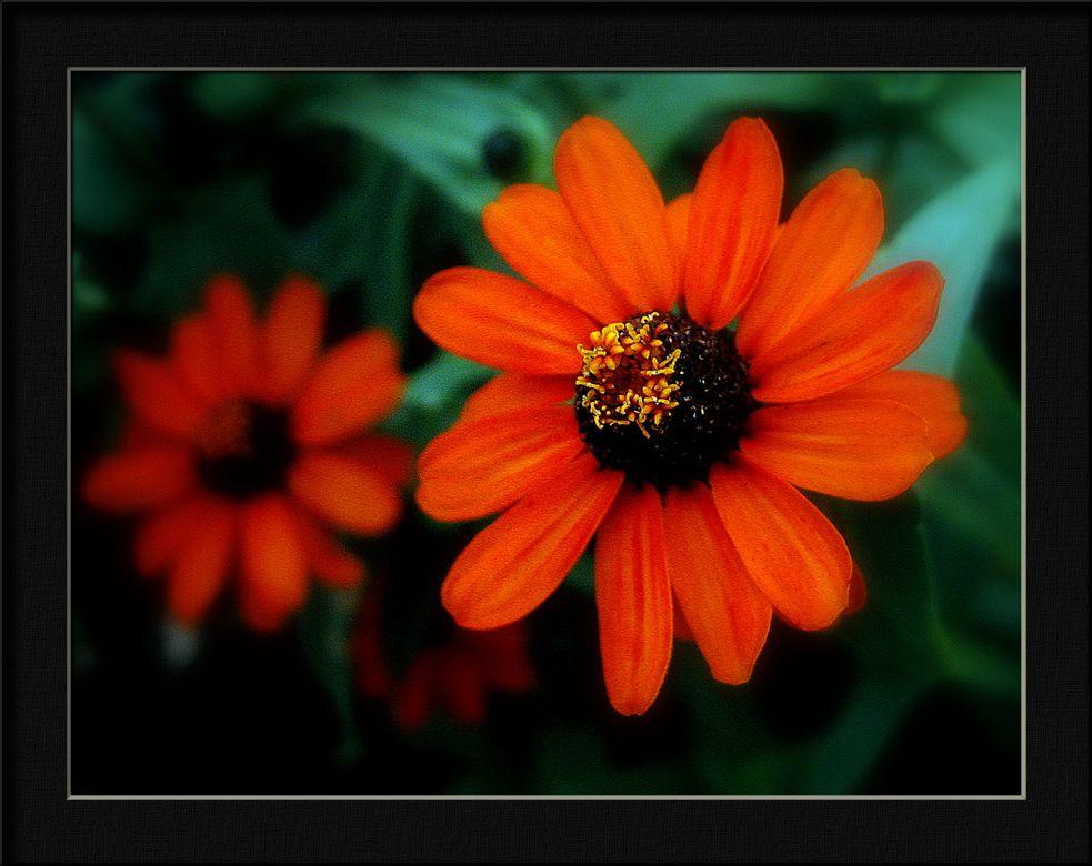 "фото ""red flower"" метки: природа, цветы"