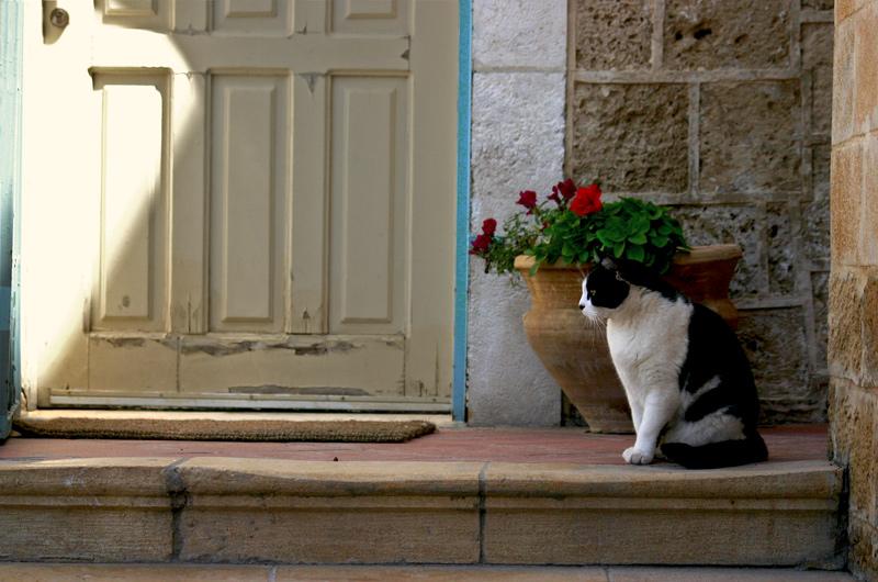 """фото """"kot"""" метки: природа, домашние животные"""