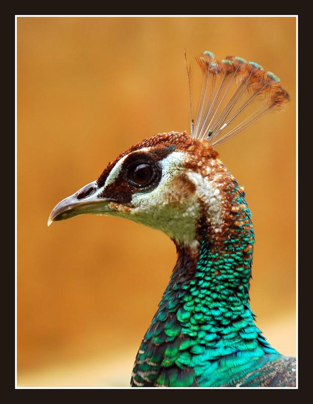 """фото """"The Queen"""" метки: природа, дикие животные"""