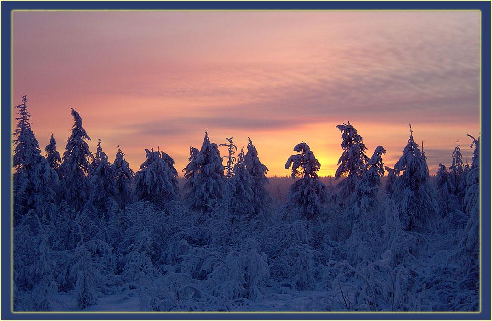 "photo ""***"" tags: landscape, forest, sunset"