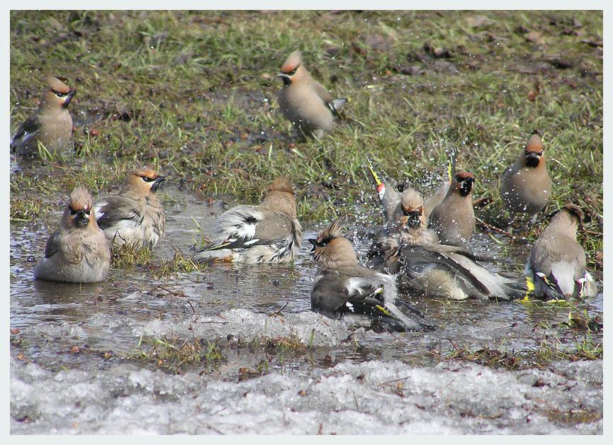 "фото ""Банька"" метки: природа, дикие животные"